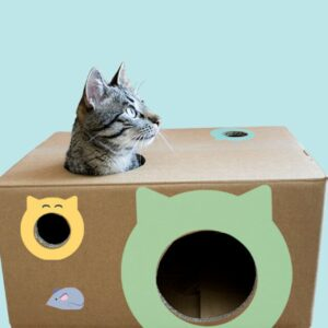 Cats Cats 01